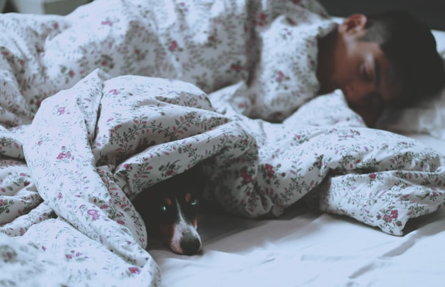 why sleep is important-man and dog under covers in bed